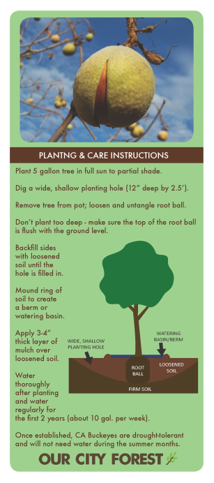 Buckeye_infotag_ArborDay2016_Page_2.png