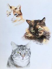 "Aunt Janette's cats - conté crayon and charcoal on paper, 11""x 14"""