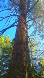 GeologyHike_TreeLightning