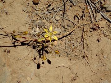 GeologyHike_yellow flower